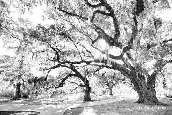 CITY PARK NEW ORLEANS LOUISIANA BLACK AND WHITE