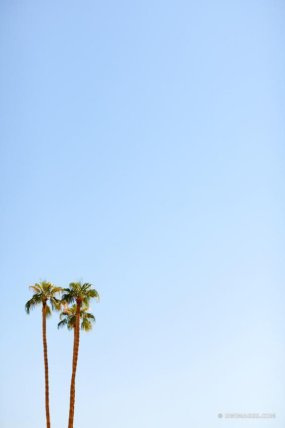 PALM TREES LOS ANGELES CALIFORNIA COLOR VERTICAL
