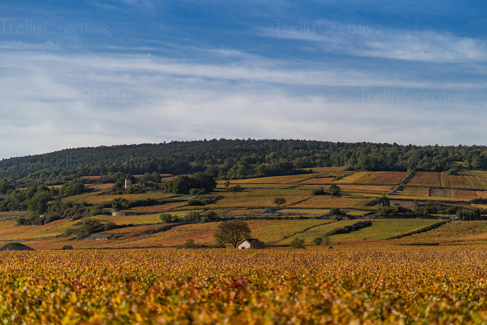 Beautiful autumn colored vineyards and wineries in Cote de Beaune, Burgundy, France in autumn