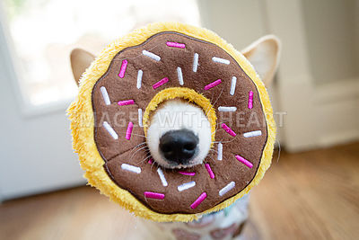 corgi dog biting donut plush toy
