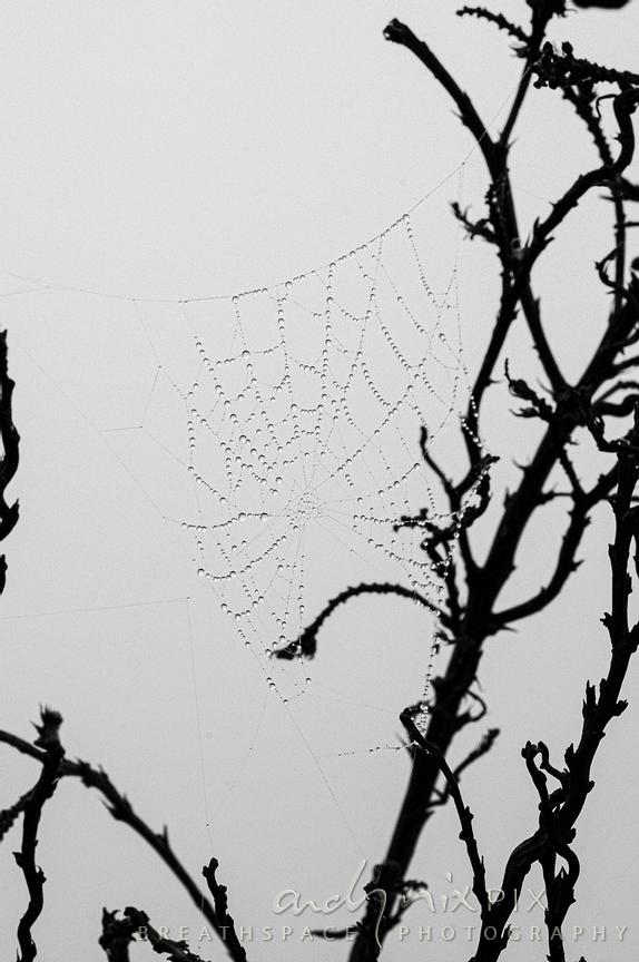 Spiderweb with mist droplets