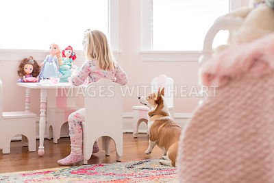 corgi puppy sitting in bedroom with girl