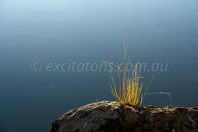 Grass growing on rock, Murray River, Australia.
