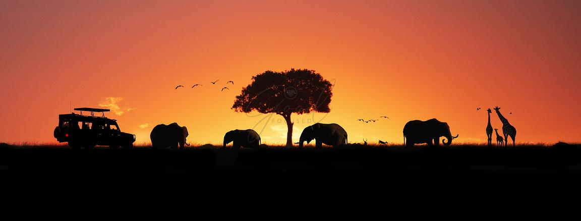 Kenya Africa Sunset Safari Web Banner
