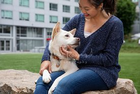 Smiling Asian Woman petting White Dog on Lap