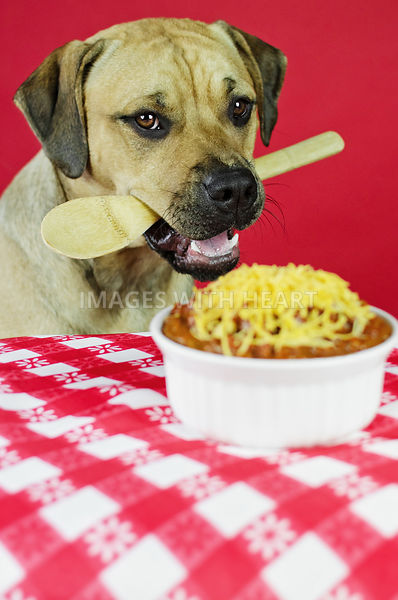 KH_Dog_holding_wooden_spoon_by_chili