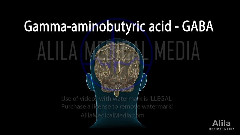 GABA receptors and GABA drugs NARRATED animation