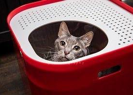 Grey Cat Sitting in Red Top Entry Litterbox
