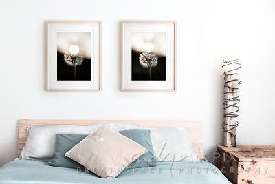 Pair of Dandelions :: Framed Wall Art Decor