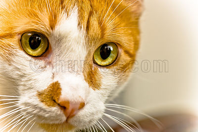 DH_Cats-0808