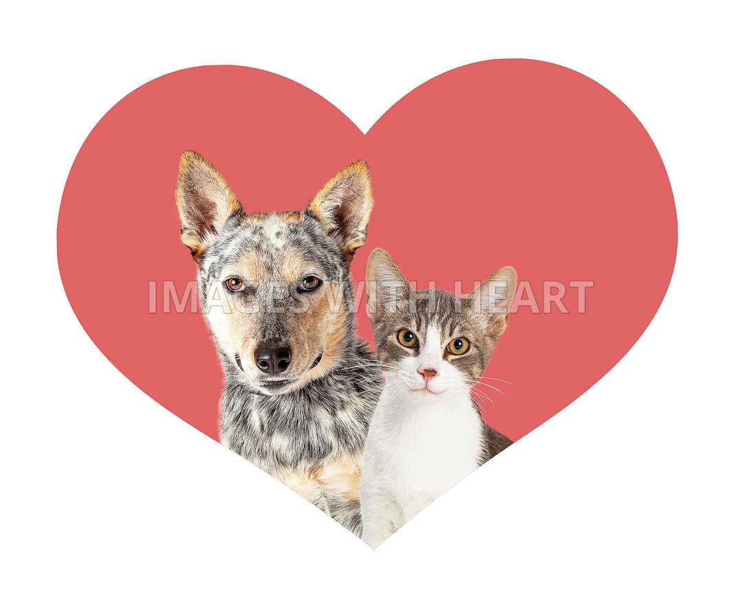 Dog and Cat Together in Valentine Heart Shape