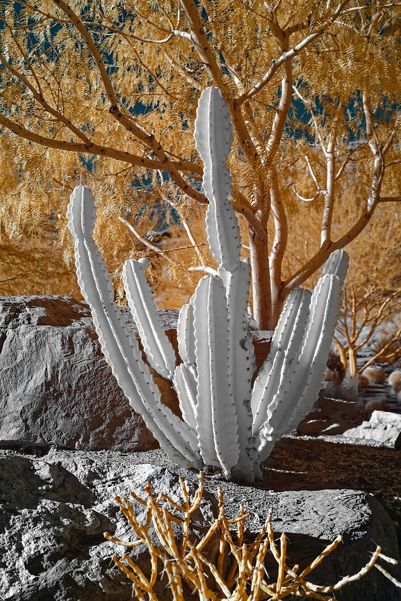 Infrared Plants