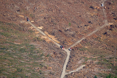 Looging Industry and Clearcuts in Washington USA