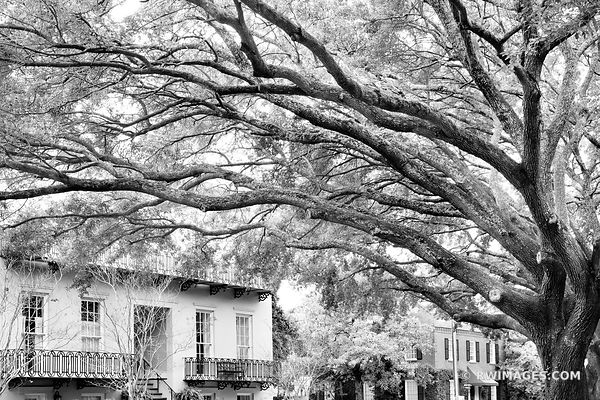 HISTORIC SAVANNAH ARCHITECTURE LIVE OAK TREES SAVANNAH GEORGIA BLACK AND WHITE