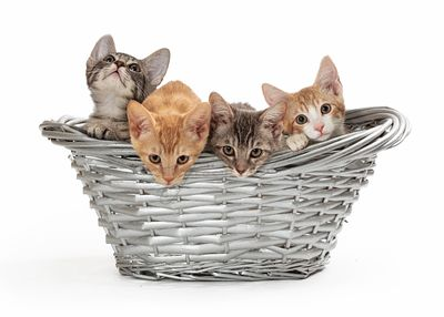Four Little Kittens in a Basket