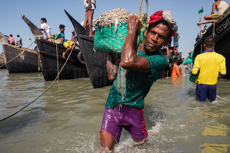 A Porter Carries Fresh Caught Fish off a Trawler