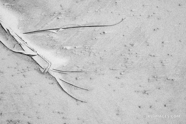 BEACH ALPHABET | NATURE ABSTRACT WHITE SAND PATTERNS CUMBERLAND ISLAND GEORGIA BLACK AND WHITE