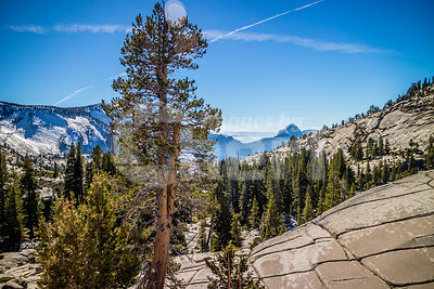 Tuolumne Grove Trailhead in Yosemite National Park, California