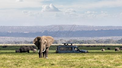African Safari Adventure With Elephants and Vehicle
