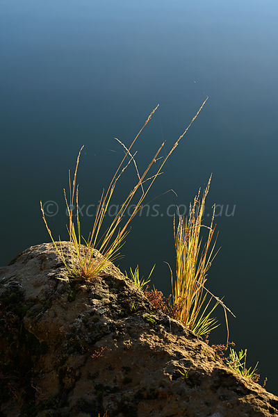 Dramatic backlit photo of grass on rivers edge. Murray River, Mildura, Australia