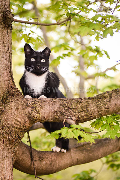 Black and white feral cat in tree