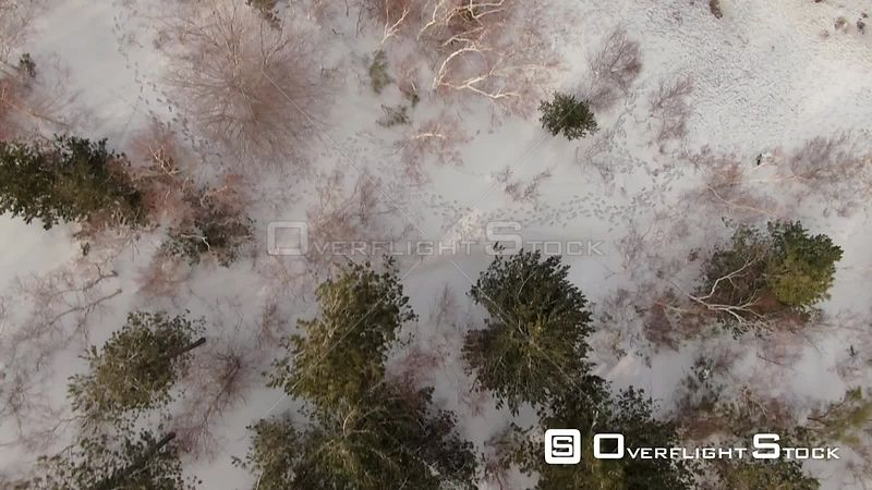 Aerial low fly over trees and snow on mount Etna Sicily, the biggest volcano in Europe