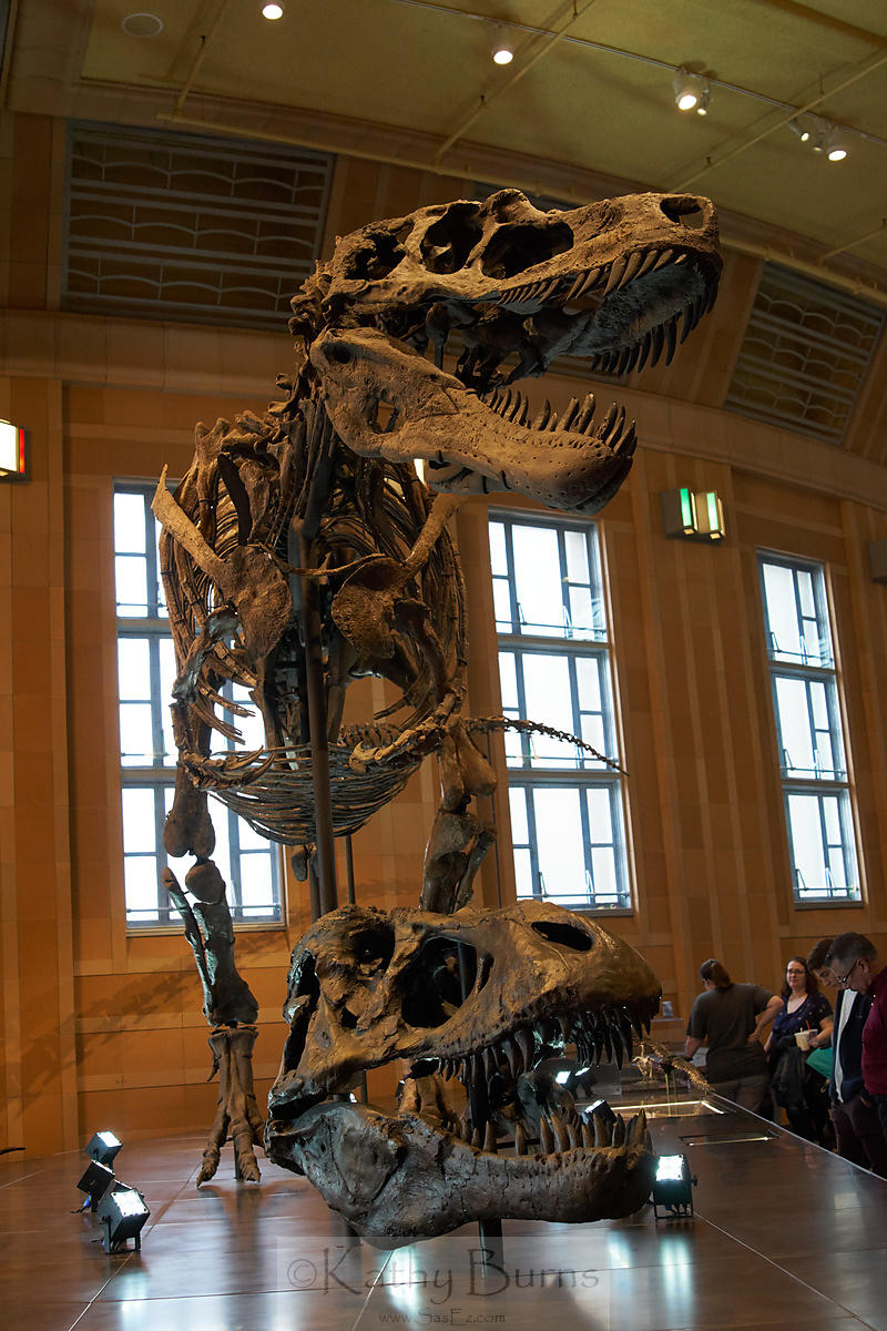 Dinosaur Skeleton at Museum