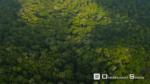 Flying over dense jungle forests looking down. Costa Rica