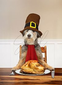 Funny Dog Carving Thanksgiving Turkey