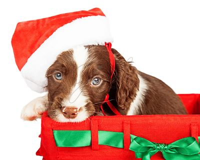 Puppy Wearing Santa Hat In Gift Basket