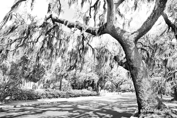 BEAUFORT SOUTH CAROLINA STREET LIVE OAK TREES SPANISH MOSS BLACK AND WHITE