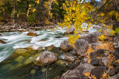Fall colours along Cayoosh Creek, British Columbia