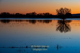 Bosque Del Apache National Wildlife Refuge, New Mexico, USA