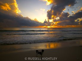 Shih-Tzu Sunset, Cottesloe Beach South