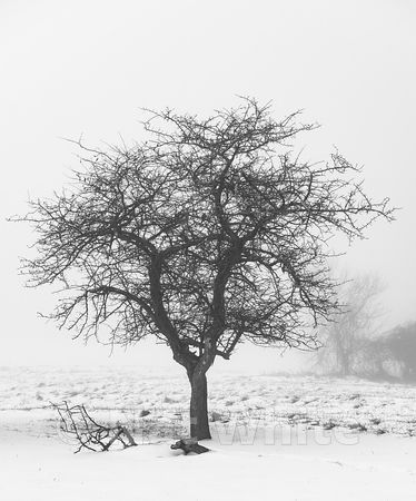 RC_fog_with_single_tree-3430_December_21_2020_NAT_WHITE