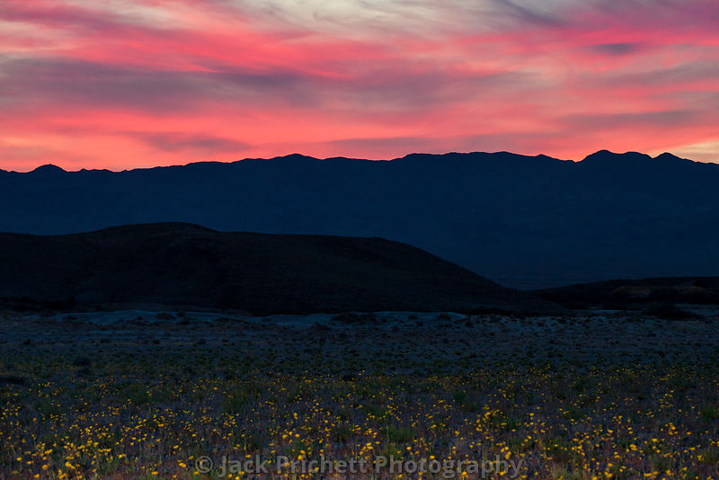 Desert Sunset with wildflowers