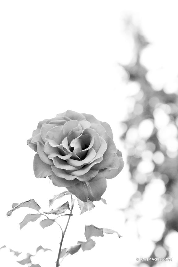 ROSE CITY PORTLAND OREGON BLACK AND WHITE VERTICAL
