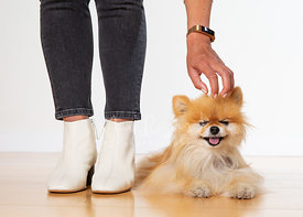 Woman Pets Blinking Pomeranian Lying on Floor