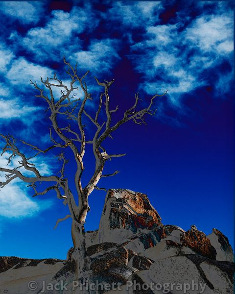_DSC1643_Josh_Tree_8x10_Hidden_Valley_tree_2_-crvs_blue_w_stroke