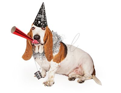Basset Hound New Years Party Dog