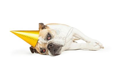 Tired Older Bulldog With Yellow Party Hat