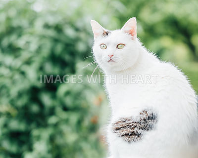 beautiful cat in garden with heart shaped patch of fur