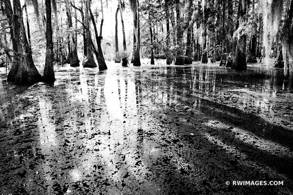 LAKE MARTIN LOUISIANA ATCHAFALAYA BASIN WETLAND SWAMP CAJUN COUNTRY BLACK AND WHITE NATURE LANDSCAPE
