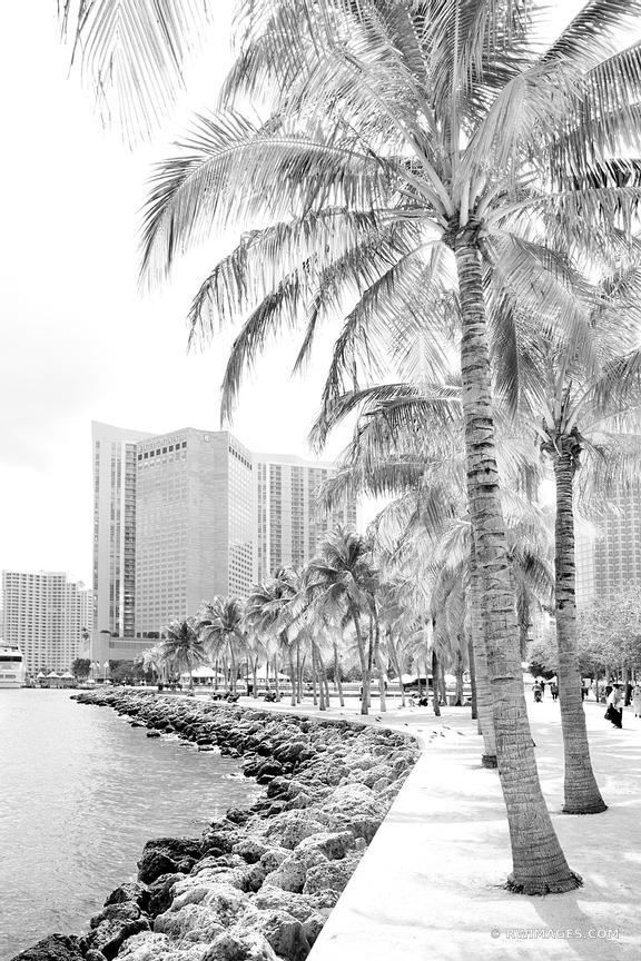 BAYFRONT PARK WATERFRONT DOWNTOWN MIAMI FLORIDA BLACK AND WHITE VERTICAL