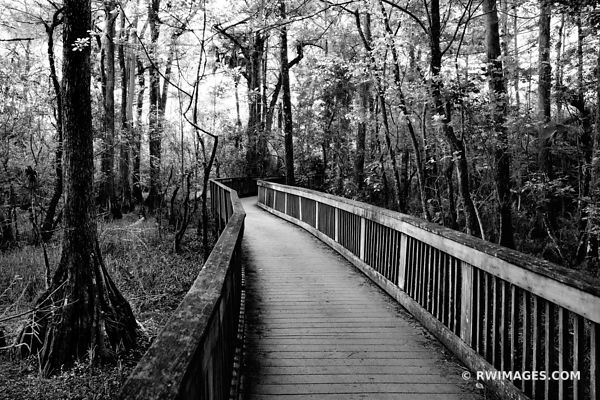 BOARDWALK KIRBY STORTER PARK BIG CYPRESS NATIONAL PRESERVE EVERGLADES FLORIDA BLACK, AND, WHITE,