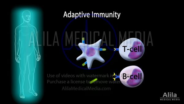 Adaptive immunity part 1- Cellular immunity, NARRATED animation