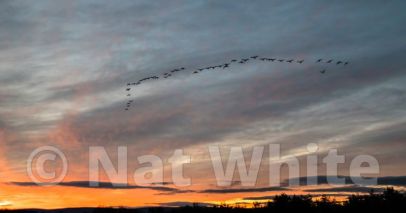 RC_super_sunset_with_geese-4013_January_02_2021_