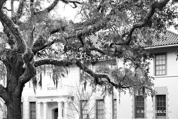 SCAD PEPE HALL CHATHAM SQUARE LIVE OAK TREES SAVANNAH GEORGIA BLACK AND WHITE