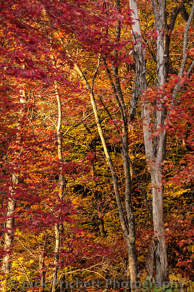 Fall forest in Montague, MA