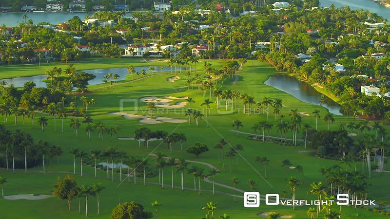Palm trees on golf course aerial drone video